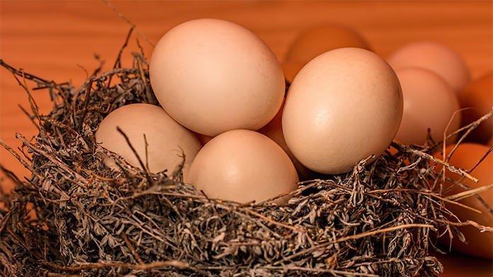 berapa biji telur sehari